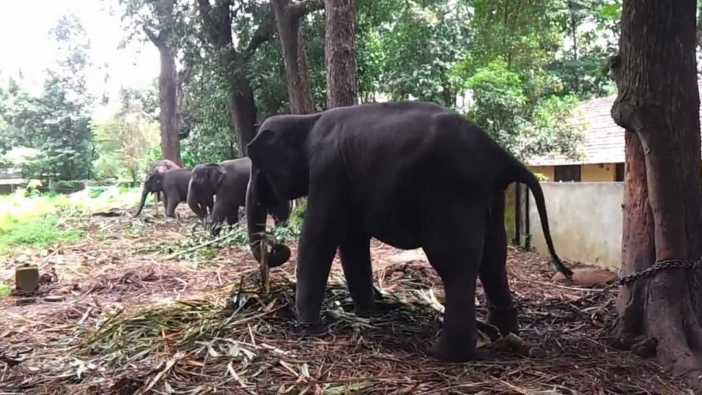 Kodanad Elephant Sanctuary