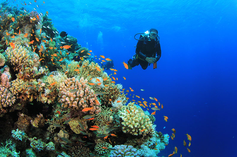 Go for Scuba dives at Andaman