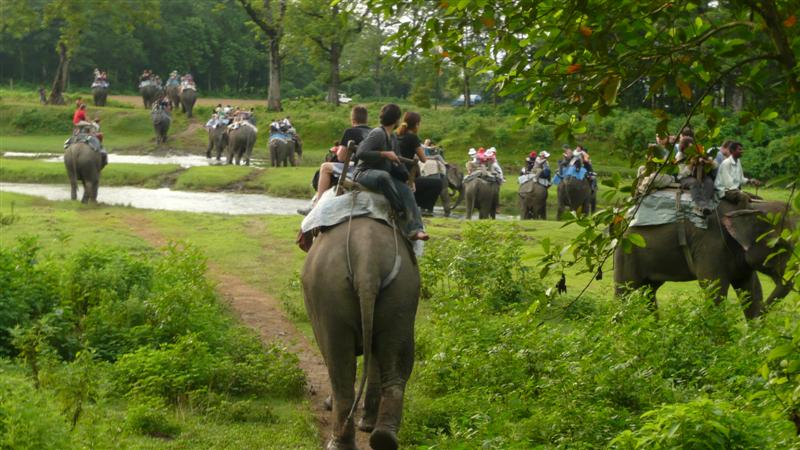 Chitwan National Park Elephant Ride