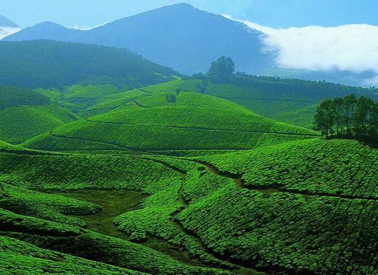 hermosas fotos de la casa en kerala 8 Das Kerala Paquetes Tursticos 8 Das Viaje De Kerala